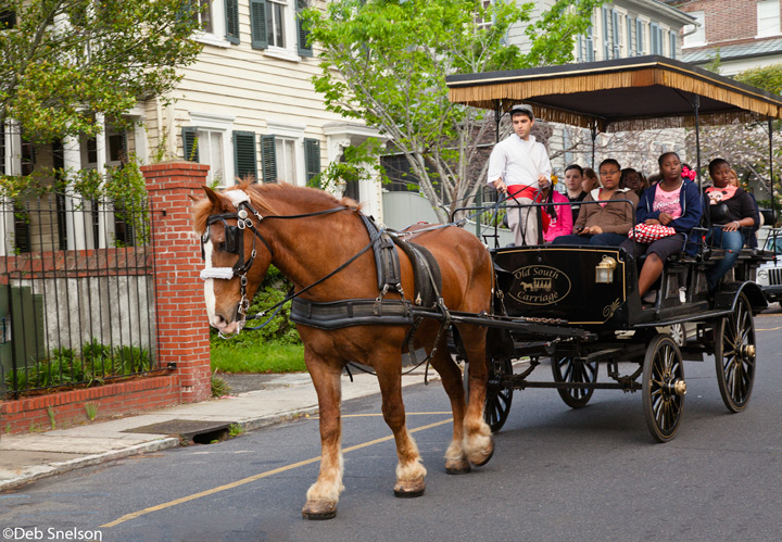 charleston sc publishes video to address horse carriage misconceptions